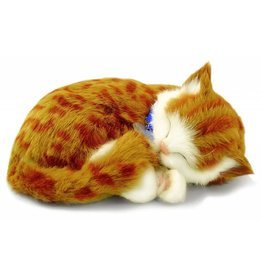 88 Unlimited Perfect Petzzz Orange Tabby