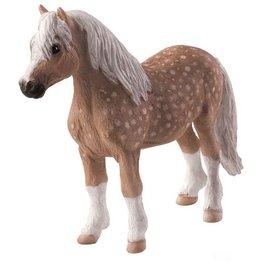 Mojo Welsh Pony