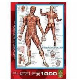 Eurographics EuroGraphics Muscular System 1000 Piece Puzzle