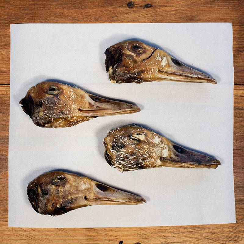 Duck/Goose Head