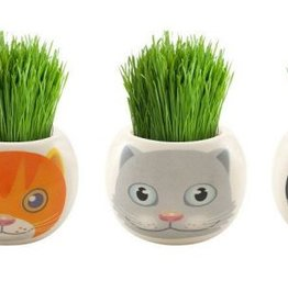 Paris Garden - Cat Ryegrass