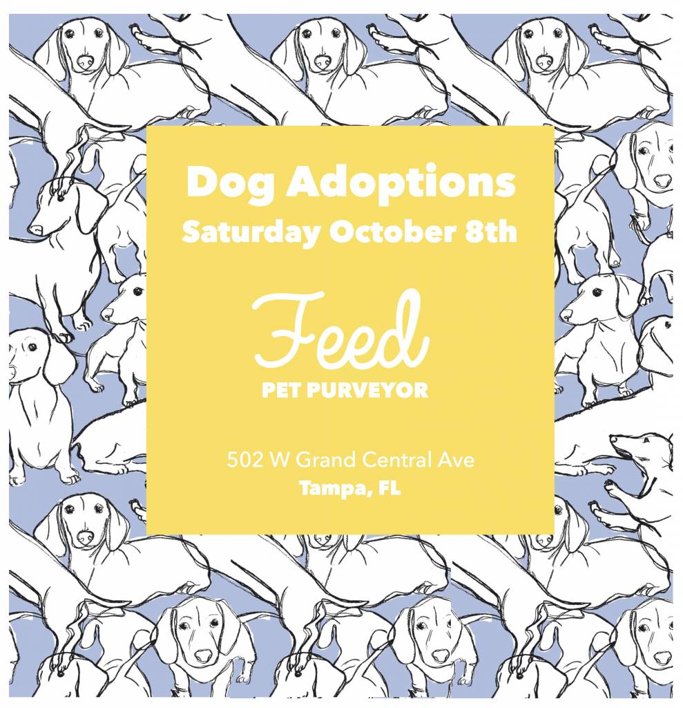 Opt to Adopt: October 8th