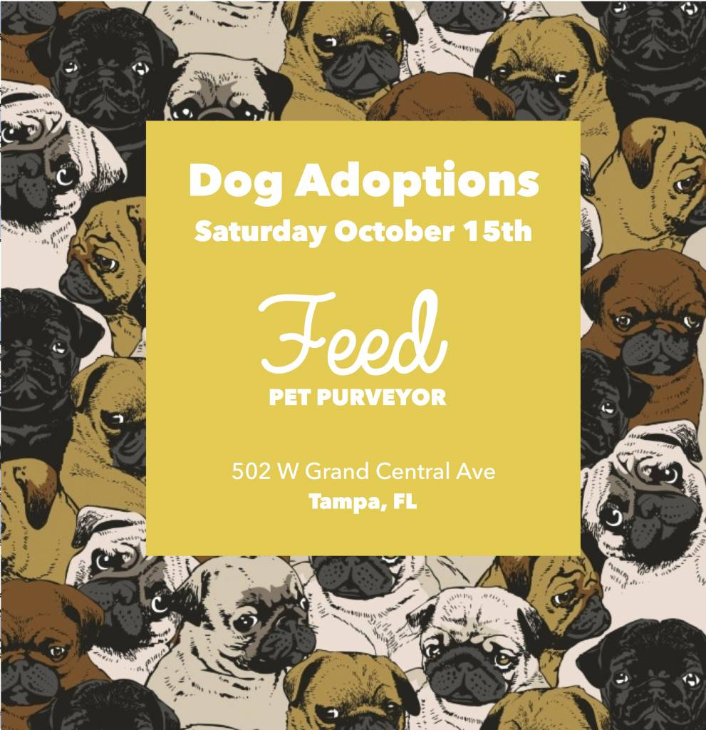 Opt to Adopt: October 15th