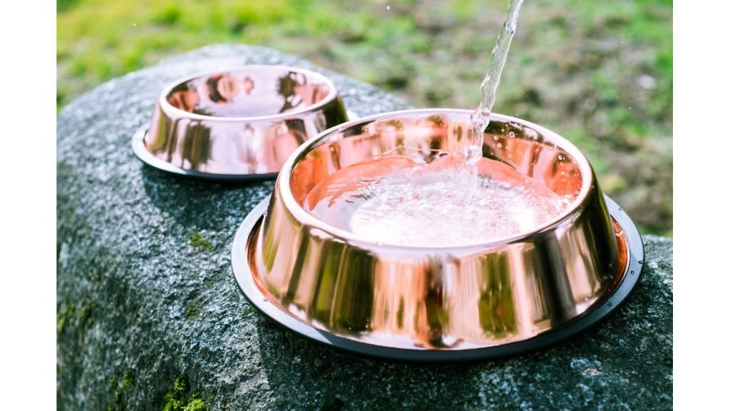 Cubowl Copper Water Bowl Feed Pet Purveyor