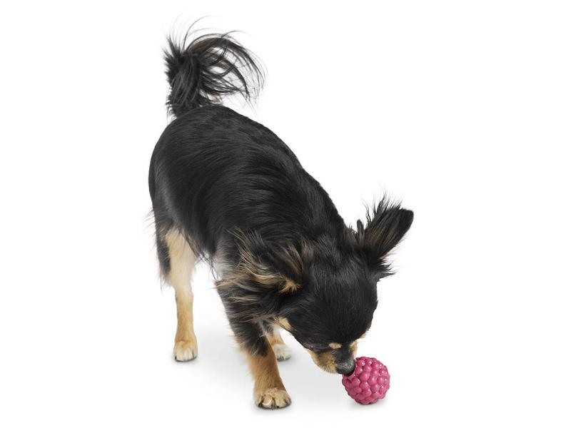 Planet Dog Raspberry Toy