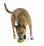 Planet Dog Artichoke Toy