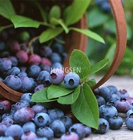 Hangsen HS Blueberry Hangsen e-Liquid