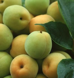 Greengage = (European Plum) Hangsen e-Liquid