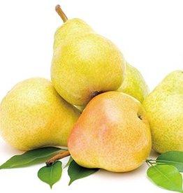 Hangsen Pear Hangsen Shisha e-Liquid