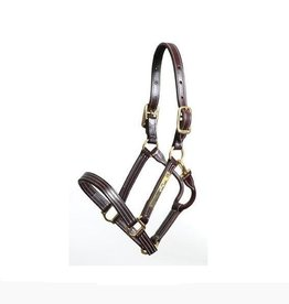 Walsh Company Inc. Walsh British Halter