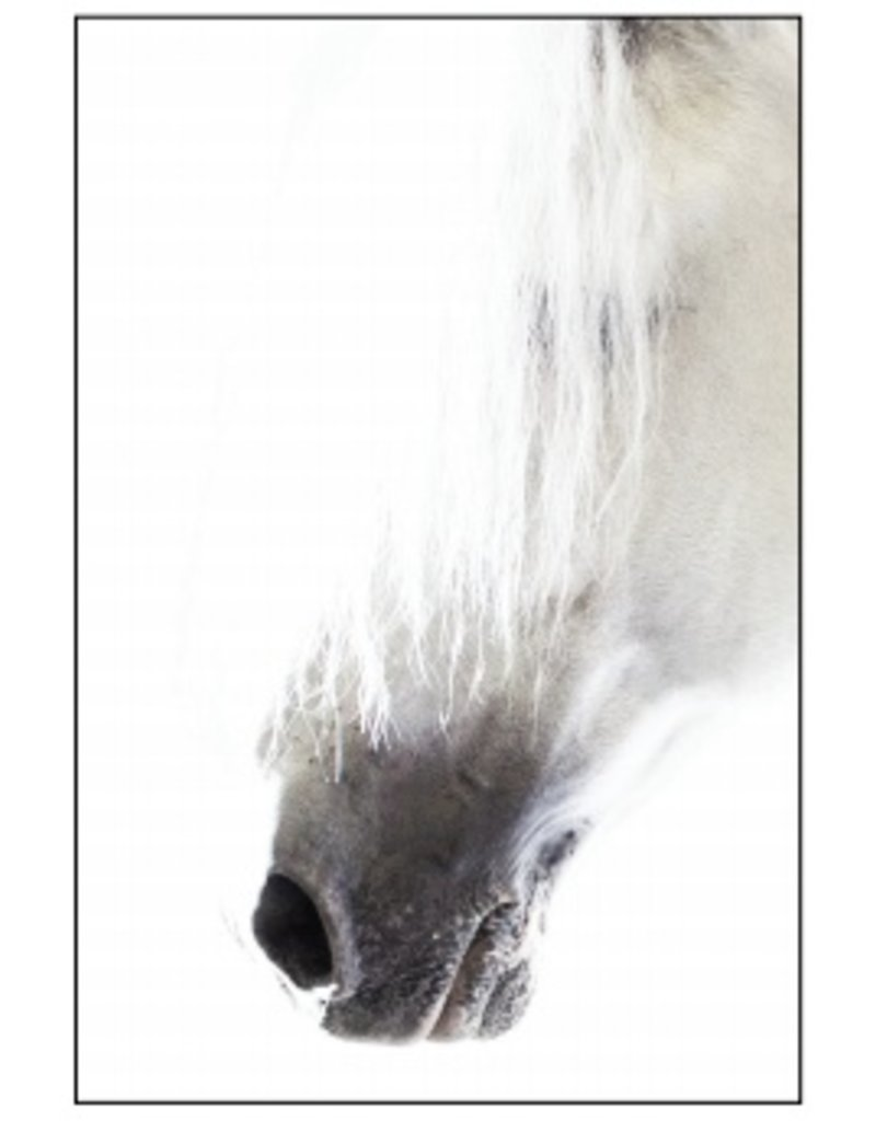 Asmar Equestrian Greeting Card