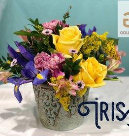 Golden Crown (in house creations) Iris