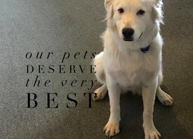 Pet Passions
