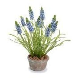 New Growth Designs Grape Hyacinth-  Blue