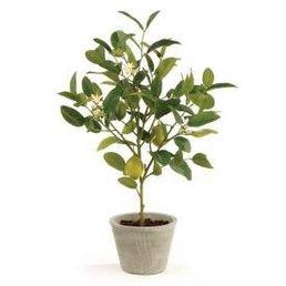 """Napa Home & Garden Lemon Topiary in Pot  24"""""""