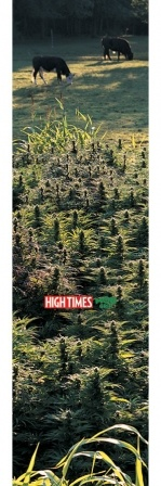 "Mob Grip Mob Grip 9"" High Times Field of Dreams Sheet"