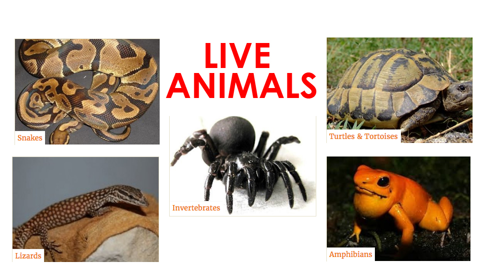 Live Animals for Sale