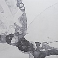 Calico Calico Wallpaper, Microcosmos