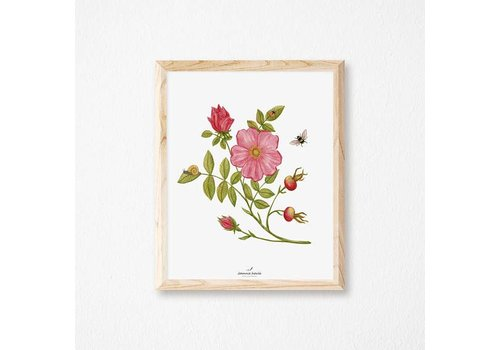 JOANNIE HOULE AFFICHE 8X10 ROSE SAUVAGE