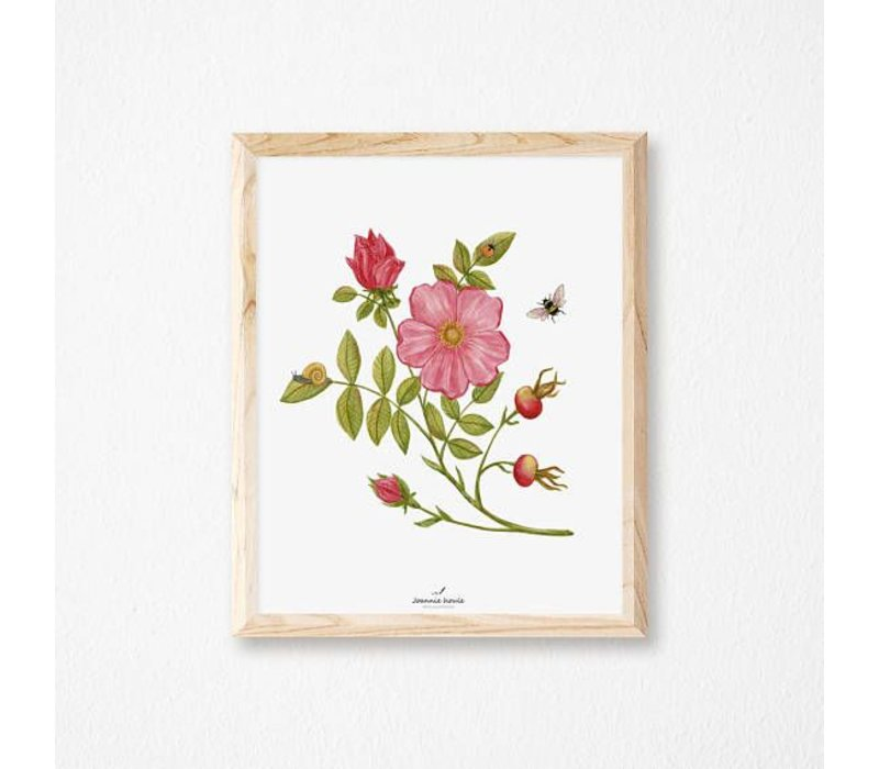 AFFICHE 8X10 ROSE SAUVAGE