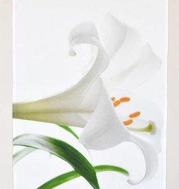 Nature's Atelier Tea Towel Peace