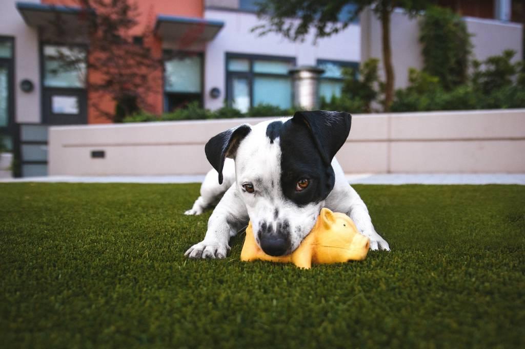 The Joys of Dog Toys