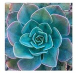 Hachette Book Group Succulent Garden Notecards
