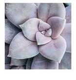 Hachette Book Group Succulent Garden Notecards