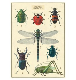 Cavallini Papers Insect Chart Wrap Sheet