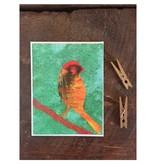 Abigail Brown Birds 2