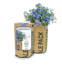 Urban Agriculture Forget-me-not