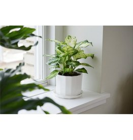 Convivial Conv - Riveted Planter/Sm
