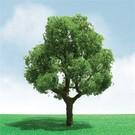 "JTT/MRC Green Deciduous Tree 2""-3""   10 pack"