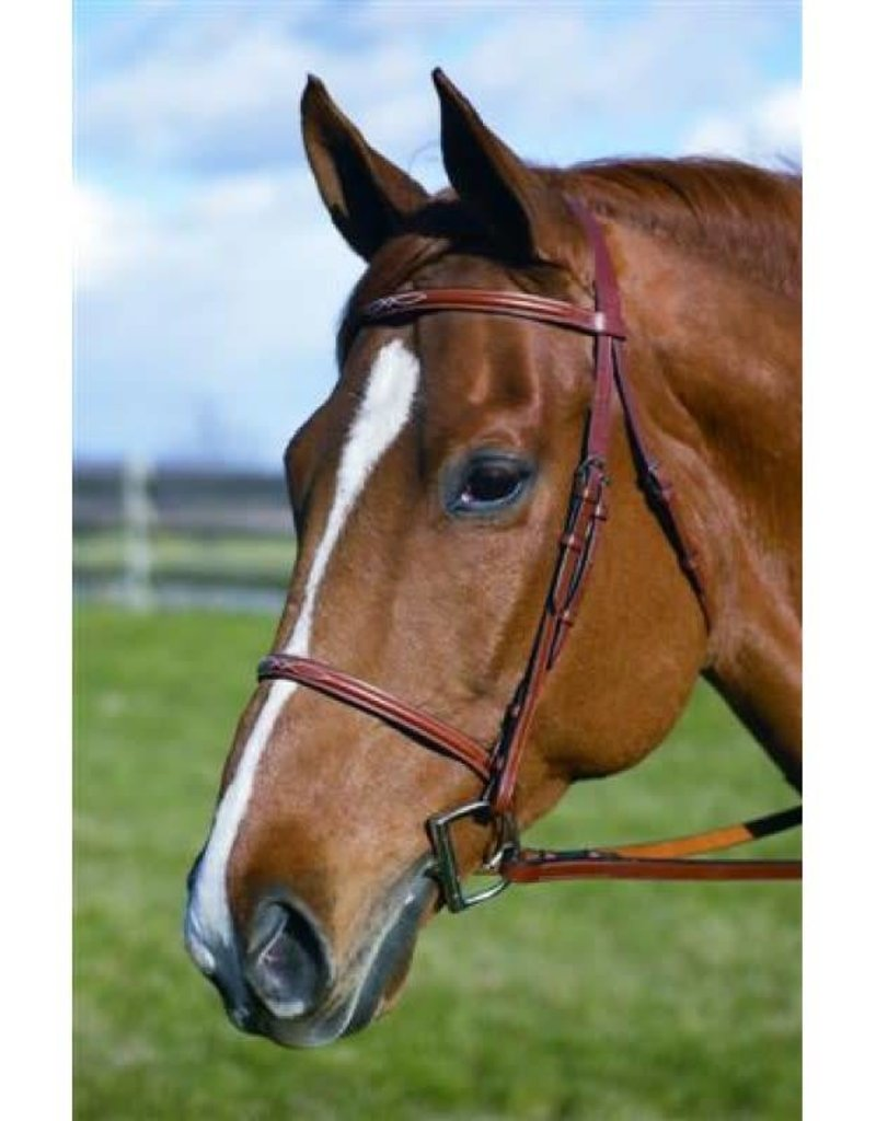 HDR ADVANTAGE HDR Advantage Fancy Stitched Bridle