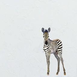 Oopsy Daisy Toile 14x14 Bébé Zèbre Encadrée de Oospy Daisy/Oopsy Daisy 14x14 Silver Leaf Framed Baby Zebra Canvas Wall Art