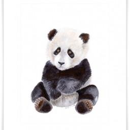 Oopsy Daisy Oopsy Daisy - Toile Portrait Bébé Panda 17x21/17x21 Baby Panda Portrait