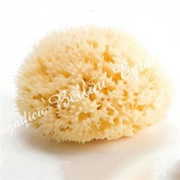 Éponge de Mer Naturelle Honeycomb de Bellini/Bellini Honeycomb Natural Sea Sponge, Moyenne/Medium