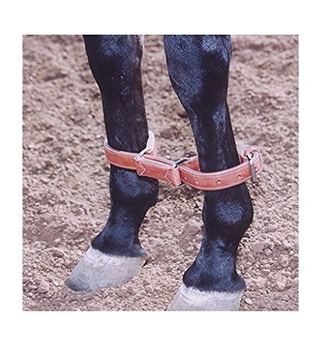 Circle L Circle L Leather Training Hobbles, L.Oil - Horse Size