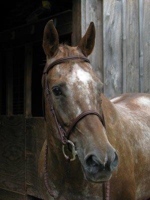 Smith Worthington Saddlery Wexford Raised Bridle Havana Horse