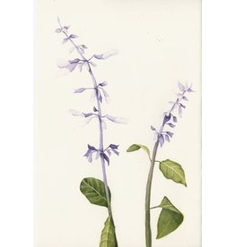Salvia Divinorum: The Diviner's Sage April 26th