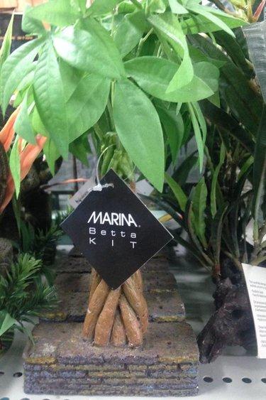 Marina plante palmier
