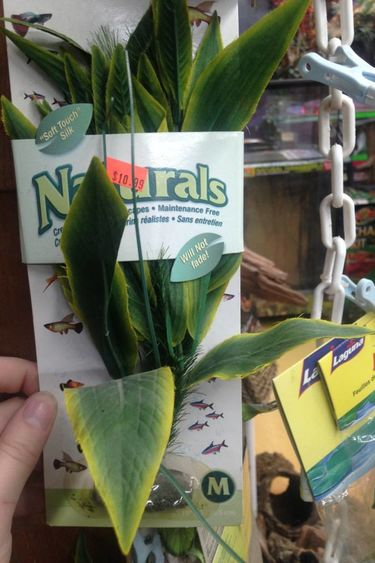 Plante dracena verte médium