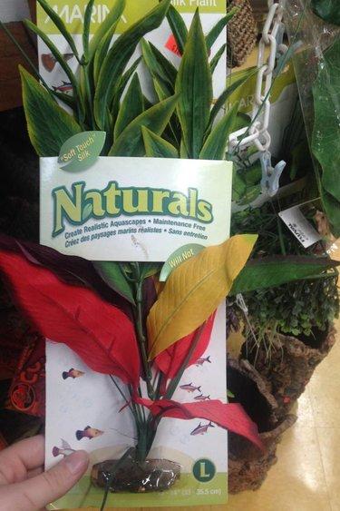 Plante dracena verte et jaune en soie large
