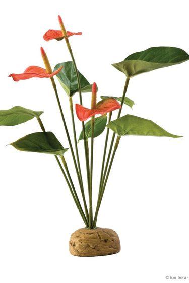 Exoterra Plante anthurium en buisson