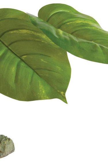 Exoterra Plante scindapsus