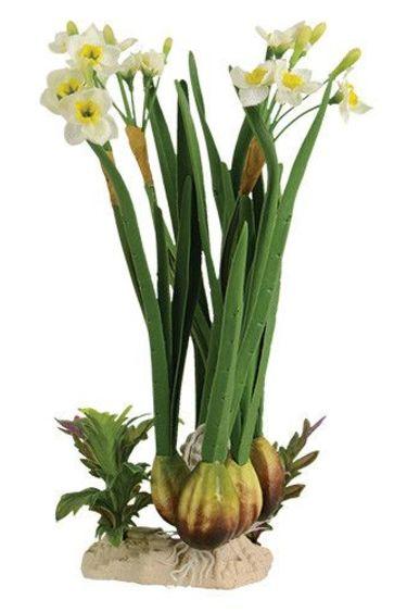 Plante Lily tigre