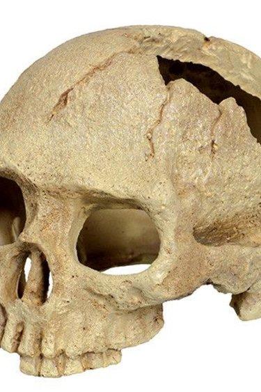 Reptiles-Planet Crâne de gorille