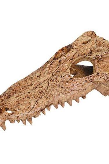 Reptiles-Planet Crâne d'alligator