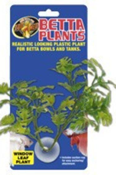 Zoomed Plante a betta feuilles de fenetre