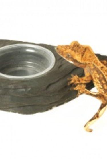 Pangea Mini bol magnétique à nourriture avec rebord pour gecko